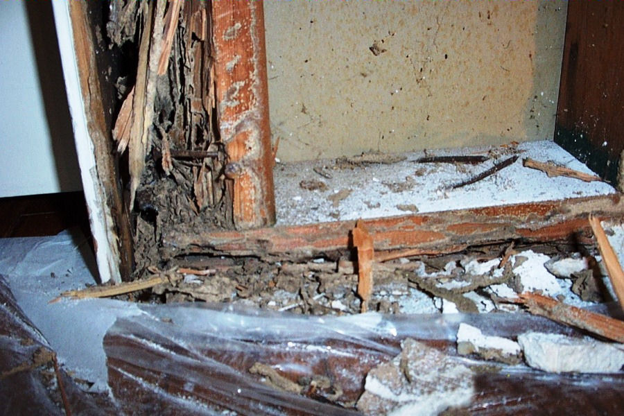 Subterranean Termite Damage to a home